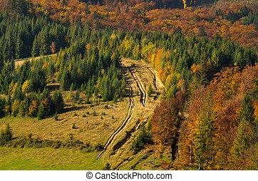 Carpathian forest in autumn.