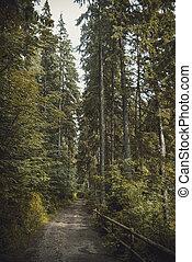 Carpathian forest in summer