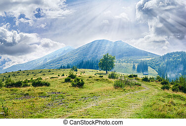 Carpathian landscape with mountain meadow in the foreground