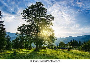 Carpathian mountain landscape with tree - Carpathian...