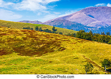 Carpathian Mountain Range in late summer - Polonyna Krasna...