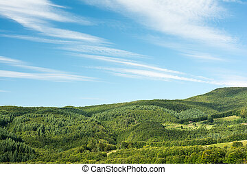 Carpathian Mountains Forest View With Blue Summer Sky