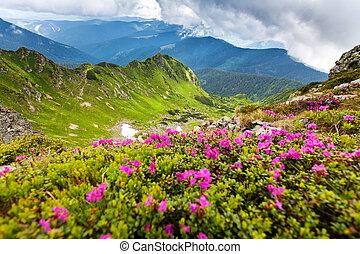 Carpathian mountains - Image of a beautiful carpathian ...