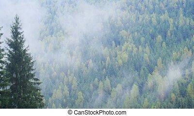 carpathian, rainforests, modéré, sur, dérives, vapeur, eau, ...