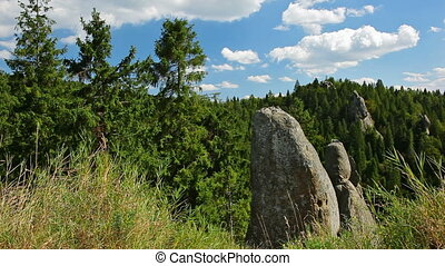 Carpathian scenic landscape with rocks, fir forest and grass...