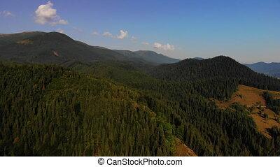 carpathians., abrutissant, vol, montagne, planet., stupéfiant, beauté, nature, notre, couvert, été, vue, arbres, europe, concept, voler, pin, drone.