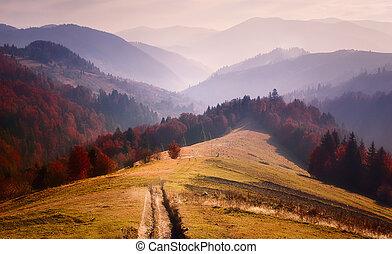 Carpathians road in nature