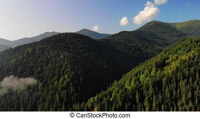 carpathians., vol, nature, notre, été, affichage montagne, europe, fog., drone., planet., arbres, couvert, surprenant, pin, stupéfiant, beauté, nuages, voler, concept