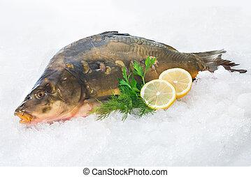 carpe, commun, fish, glace