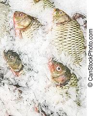carpe, commun, fish