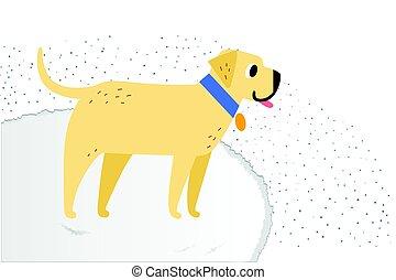 carpet., labrador, flaumig, rasse, hund, gelber , heiter, smiles., apportierhund