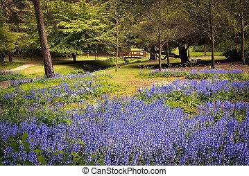 Carpet of bluebells near a bridge in Bournemouth Gardens