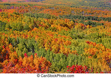 Carpet of fall trees - Beautiful harmony of autumn colors in...