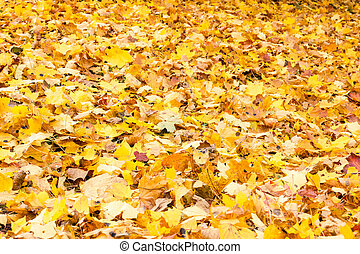 Carpet of fallen autumn foliage