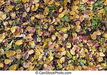 Carpet of fallen autumn leaves in a city park