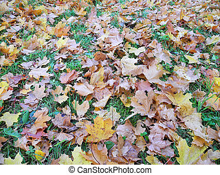Carpet of leaves in autumn