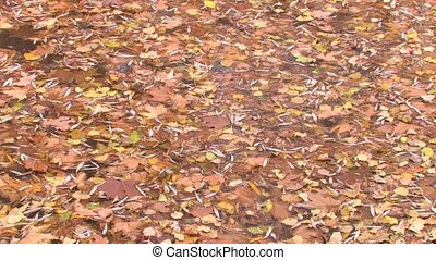 Carpet of leaves on the water