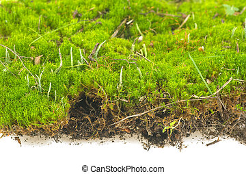 carpet of moss on a white background