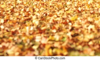 Carpet of yellow leaves Follow focu