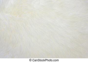 carpet wool carpet