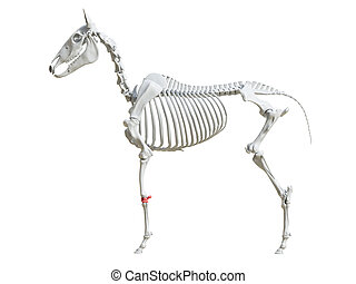 carpo, -, equino, esqueleto