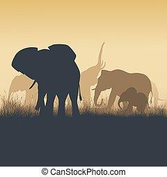 carrée, animaux, savanna., coucher soleil, illustration, sauvage