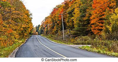 carreggiata, attraverso, cadere, colorato, foglie