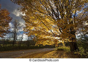 carreggiata, giù, scenico, autunno, paese, paesaggio, vista