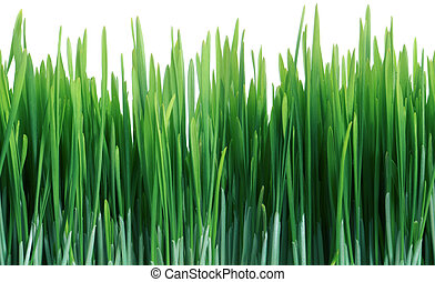 carrelage, seamless, isolé, vert, carreau, répéter, herbe