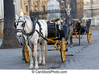 carriage Andalusian - carriage typical Andalusian (southern...