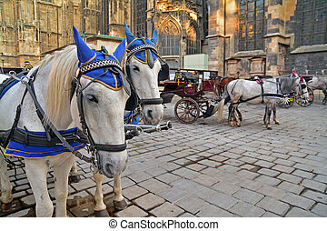 carriage horse - Carriage horses waiting for tourists in the...