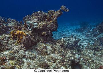 carribean, 珊瑚礁