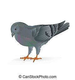 Carrier pigeon  vector.eps