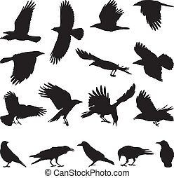 black isolated silhouettes of carrion crow on the white background