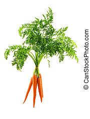 Carrot - A bunch of fresh carrots