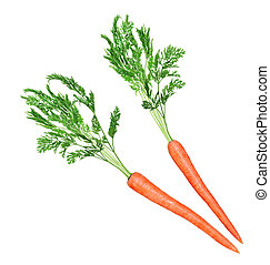 Carrot and Leaf - Two carrot roots with leaves isolated on...