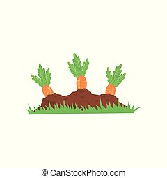 Carrot growing from ground. Vegetable on garden bed. Organic and healthy food. Agronomic product. Concept of farming or gardening. Colorful flat vector illustration isolated on white background.