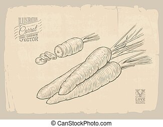 carrot illustration