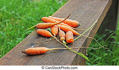 Carrot on a wooden board in the garden