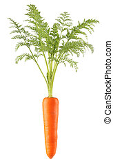 carrot - a single carrot and leaf with white background