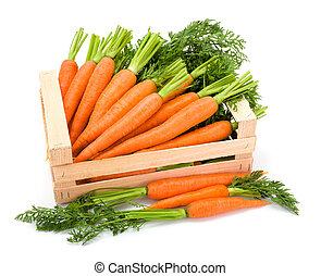 Carrot roots (Daucus carota ssp. sativus) in wooden crate
