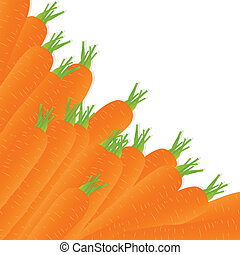 Carrot vector background ecology