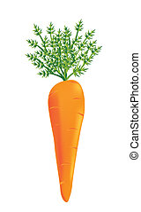 carrot vector - carrot isolated over white background. ...