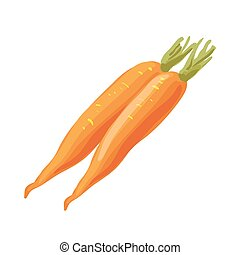 Carrot vegetable isolated on white background.