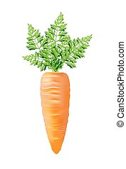 carrot with top vector illustration