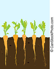 A cross-section of carrots growing in rich, dark soil. Space for your text. EPS10 vector format.