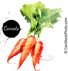 carrots., hånd, stram, mal watercolor, på hvide, background?