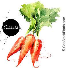 carrots., hand, gezeichnet, aquarellgemälde, weiß,...
