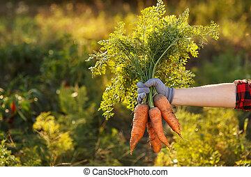 carrots in hands