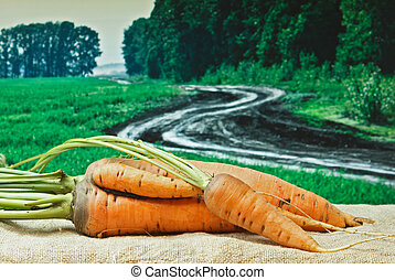 carrots on the background of agricultural lands